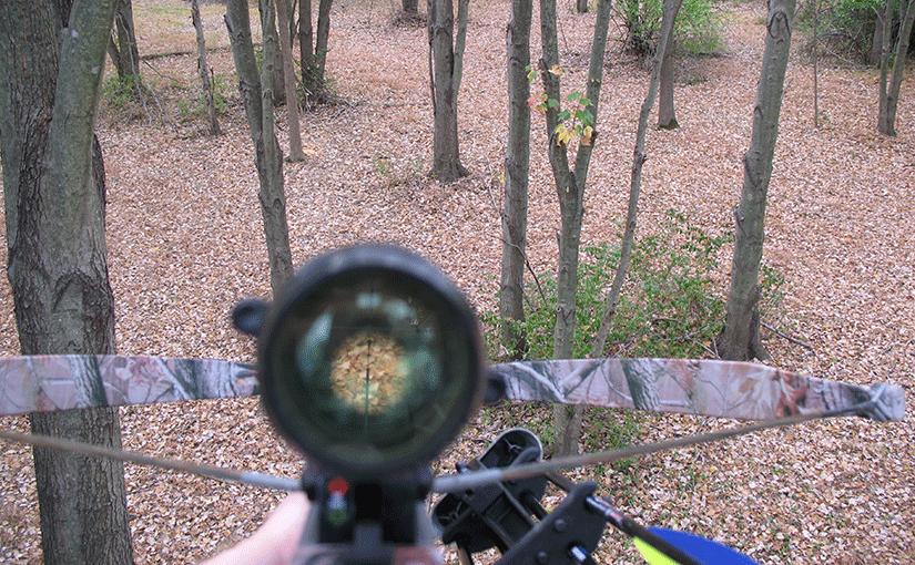 La chasse à l'arbalète